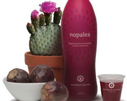 The Nopalea Wellness Drink